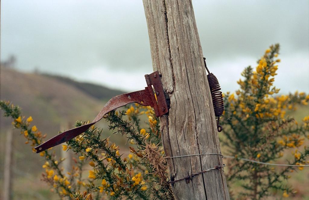 Nikon F80 - Kodak Ektar img015