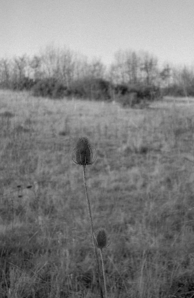 Canon_af35_FP4-006-Edit