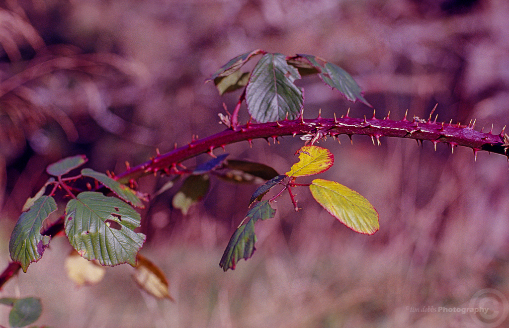 Autumn colours with Kodak Ektachrome E100VS … part 2