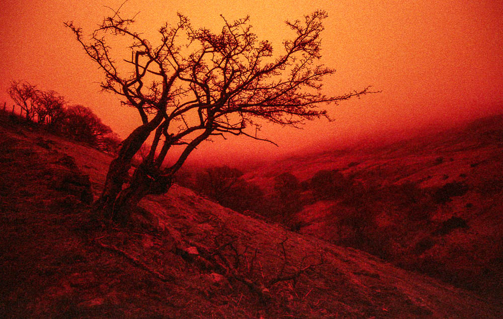 #BIFScale18 … my keepers from 2 rolls of 35mm Redscale…