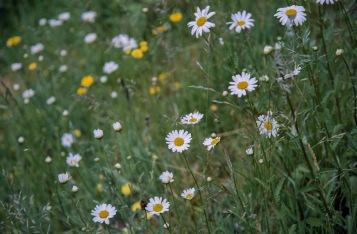 Kodak50D_034
