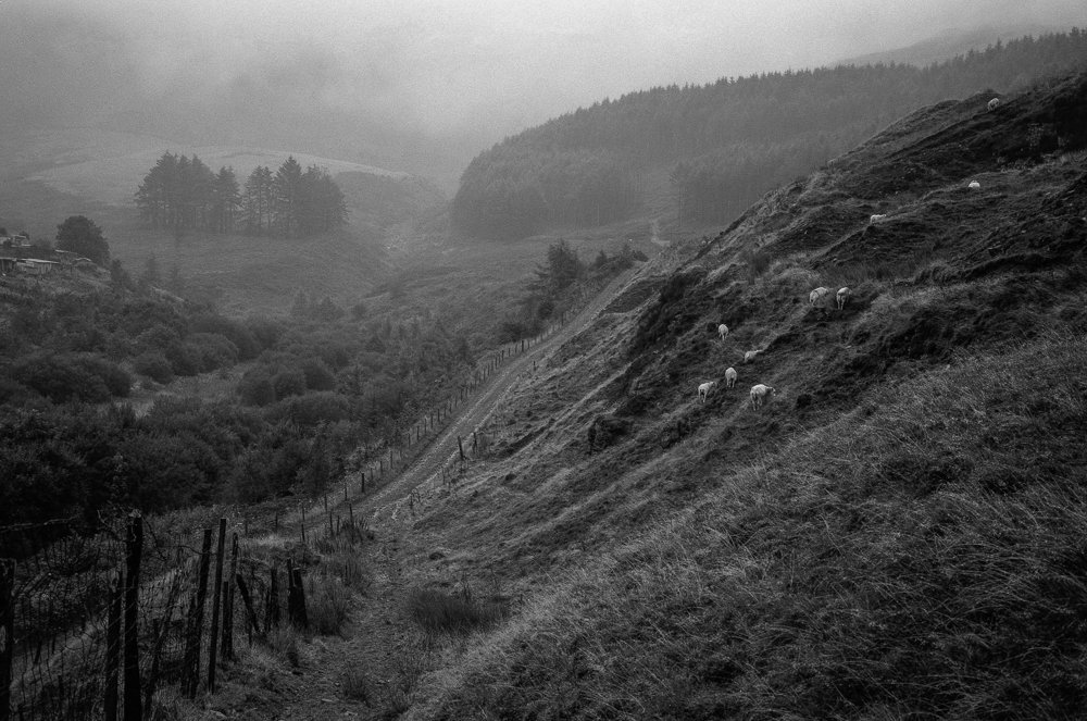 Fuji GW690III and Rollei RPX 400 in the mist ….