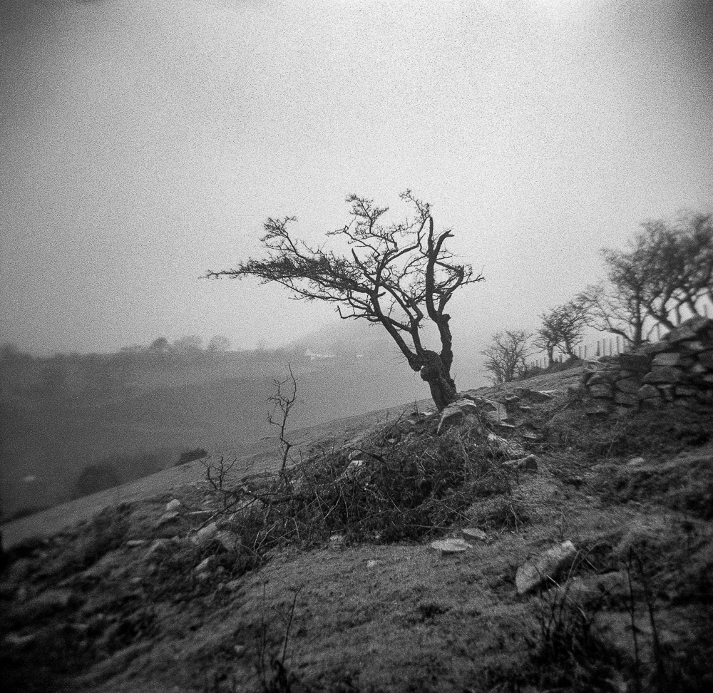 My Crappy Holga re-visited with some Foam/Card and Tape on ilford HP5 …..