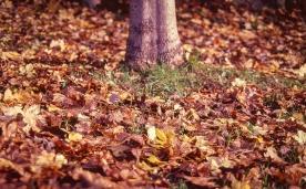 Kodak Elitechrome 100_Pentax Program A_004