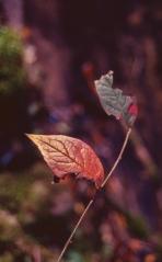 Kodak Elitechrome 100_Pentax Program A_017