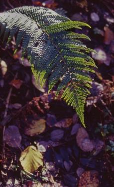 Kodak Elitechrome 100_Pentax Program A_018