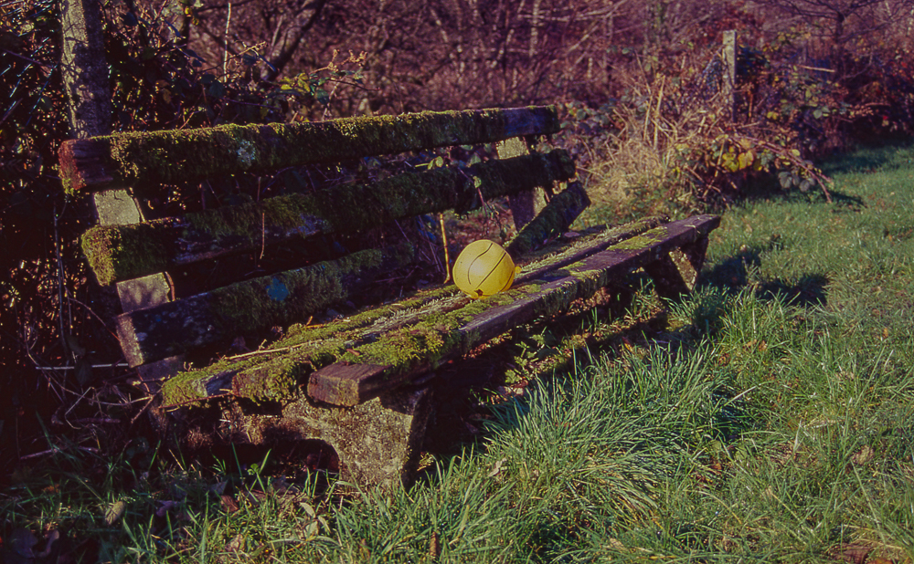 Last remains of Autumn on Kodak Elitechrome 100…..