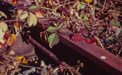 Kodak Elitechrome 100_Pentax Program A_025