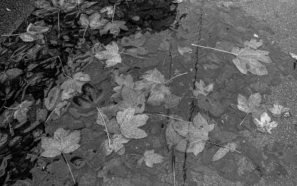 Kodak T-Max 3200_010