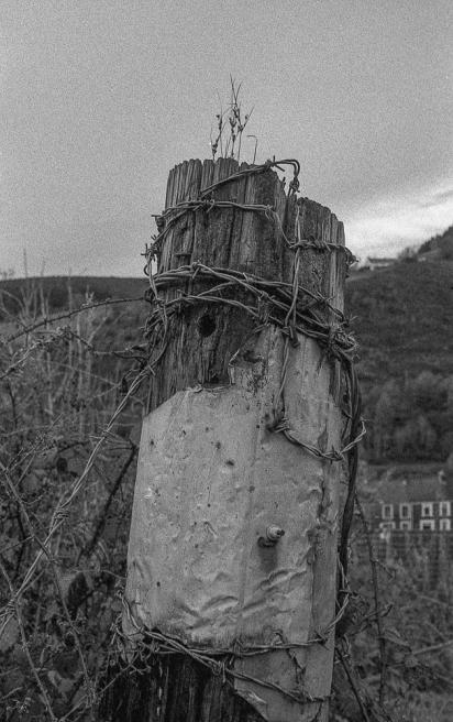 Kodak T-Max 3200_025