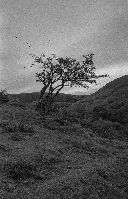 Kodak T-Max 3200_033