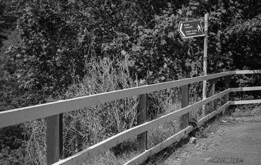 TriX_LeicaM2-007
