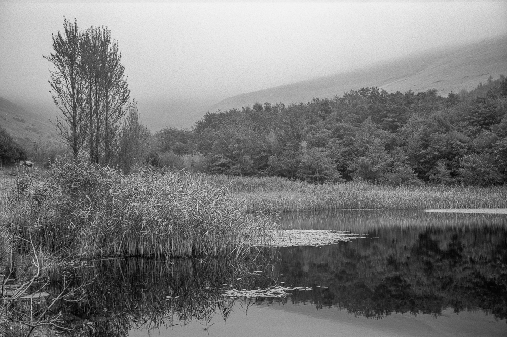 A walk to Ocean Colliery in the mist with Rollei Retro 400S ….. the whole roll